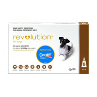 Revolution Medium Dog 5.1-10kg 6 Pack (DHR0100)